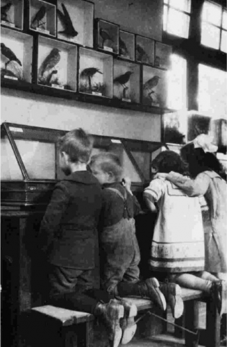 Children viewing exhibits at St George's Nature Study Museum